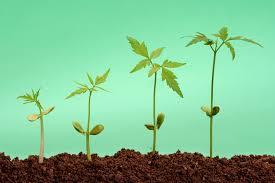 Evolutie SEO - crestere organica